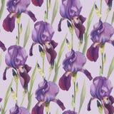Floral seamless pattern with violet iris. Floral seamless pattern with hand drawn watercolor violet iris Royalty Free Stock Image