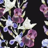 Floral seamless pattern with watercolor irises Stock Photos