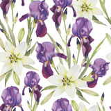 Floral seamless pattern with watercolor irises and white lilies Royalty Free Stock Photography