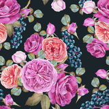 Floral seamless pattern with watercolor purple and orange roses and black rowan berries Royalty Free Stock Photos