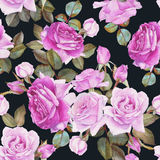 Floral seamless pattern with watercolor purple roses on the black background Royalty Free Stock Photography