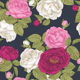 Floral seamless pattern with white, pink and crimson roses Royalty Free Stock Photography