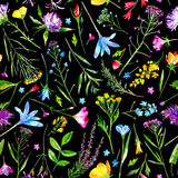 Floral seamless pattern of a wild flowers and herbs on a black background. Buttercup,cornflower,clover,bluebell,forget-me-not,vetch,grass,lobelia,snowdrop royalty free illustration