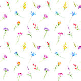 Floral seamless pattern of a wild flowers and herbs. Buttercup, cornflower, clover, bluebell, snowdrop flowers. Watercolor hand drawn illustration. White Royalty Free Stock Images