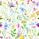 Floral seamless pattern of a wild flowers and herbs on a white background. Buttercup,cornflower,clover,bluebell,forget-me-not,vetch,grass,lobelia,snowdrop Royalty Free Stock Photo