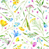 Floral seamless pattern of a wild flowers and herbs on a white background. Buttercup,cornflower,clover,bluebell,forget-me-not,vetch,grass,lobelia,snowdrop Stock Photo