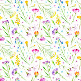 Floral seamless pattern of a wild flowers and herbs on a white background. Buttercup,cornflower,clover,bluebell,forget-me-not,vetch,grass,lobelia,snowdrop Royalty Free Stock Photography