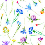 Floral seamless pattern of a wild flowers and herbs on a white background. Buttercup, cornflower, clover, bluebell, lobelia, snowdrop flowers. Watercolor hand stock illustration