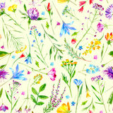 Floral seamless pattern of a wild flowers and herbs on a yellow background. Buttercup,cornflower,clover,bluebell,forget-me-not,vetch,grass,lobelia,snowdrop Stock Photos