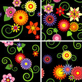 Floral seamless patterns Stock Images
