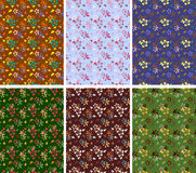 Floral seamless patterns collection Stock Image