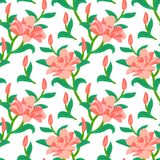 Floral seamless vector pattern with peony flowers Stock Images