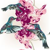 Floral seamless wallpaper pattern with hummingbirds and orchid f Stock Images