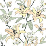 Floral seamless white background. gentle flower pattern. Stock Image