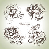 Floral set. Hand drawn illustrations of roses Stock Photos