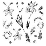 Floral set in black and white. Doodle flowers. And leafs Royalty Free Stock Photos