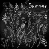 Floral set on chalkboard Royalty Free Stock Image