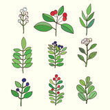 Floral set. Colorful floral collection with leaves and flowers. Vector Illustration