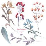 A floral set with the isolated watercolor branches, flowers and berries Royalty Free Stock Photo