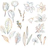 Floral set. Line drawing floral set drawing by colored pencils with tulips, narcissus, orchids, bell flowers and different leaves, creative multicolor decorative Royalty Free Stock Photography
