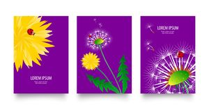 Floral set of posters, flyers or cards with dandelions field flowers. Vintage retro templates design. Spring or summer bright vector illustration