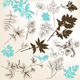 Floral set of vector leafs Royalty Free Stock Photo