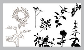 Floral silhouettes set Stock Image