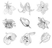 Floral sketch illustration. Hand drawn sketch of flowers  illustration Stock Images