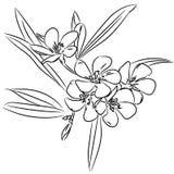 Floral sketch pattern  for design Royalty Free Stock Image