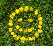 Floral smile. Made of dandelions over green grass Royalty Free Stock Photos