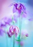 Floral soft tender  background from blue fresh cornflower defocused  macro image Stock Images