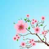 Floral Spring background Stock Image