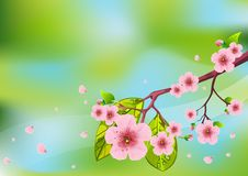 Floral Spring background Royalty Free Stock Image