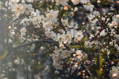 Floral spring background branch of cherry, apple tree with blossoming flowers instagram style. Still life concept, film stock photos