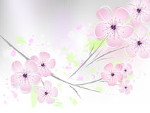 Floral spring background - cherry blossoms Stock Photo
