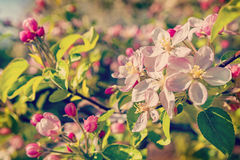 Floral spring background flower of blossoming Stock Photos