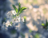 Floral spring blurred background Royalty Free Stock Photo