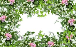 Floral spring decoration frame with pink roses, green leaves and wild herbs on white background stock photo