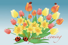 Floral spring - tulip and ladybird Royalty Free Stock Photography