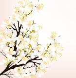 Floral spring vector background with pretty white flowers on che Royalty Free Stock Photos