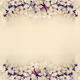 Floral springtime background frame with cherry blossom Stock Images