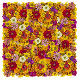 Floral square Royalty Free Stock Images