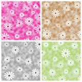 Floral squares Stock Image