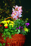 Floral Still life. Flower and plants in the basket - still life stock photos