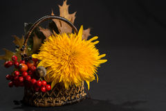 Floral still life with sunflower in autumn colors on dark backgr Royalty Free Stock Images