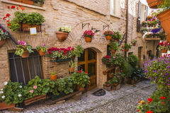 Floral streets of Spello in Umbria, Italy. Royalty Free Stock Photography