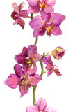 Floral strip border with exotic flowers orchids Royalty Free Stock Photography