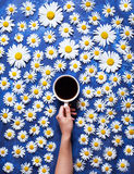 Floral summer background. A mug of coffee in a woman`s hand on a blue background with chamomile or daisies. Hello summer. The concept of the arrival of summer Stock Image