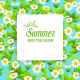 Floral summer card Stock Image