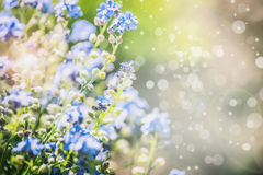 Floral summer nature background with blue flowers and sun shine. With bokeh lighting Stock Image